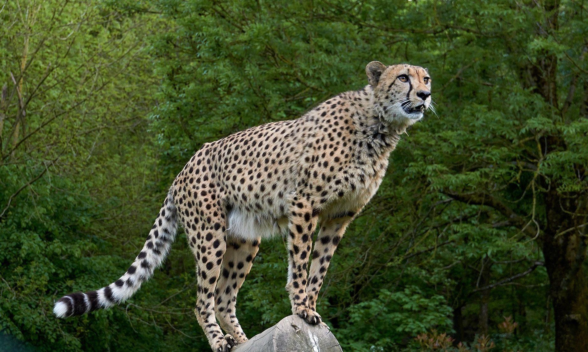 S nestankom plodne zemlje izumiru i životinjske vrste